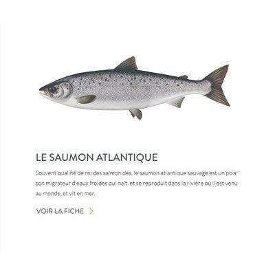Saumon4